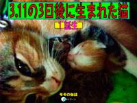 3.11の3日後に生まれた猫1 誕生_表紙