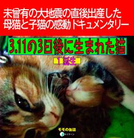 3.11の3日後に生まれた猫[誕生]